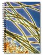 Oscillatoria Spiral Notebook