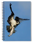 Osprey And Rainbow Trout Spiral Notebook