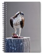 Osprey And Sushi Spiral Notebook