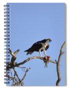 Osprey With Catch I Spiral Notebook