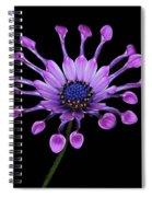 Osteospermum Spiral Notebook