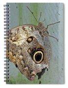 Owl Butterfly Spiral Notebook