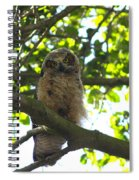 Owl In Central Park Spiral Notebook