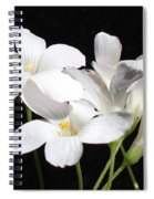 Oxalis Flowers 2 Spiral Notebook