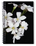 Oxalis Flowers 3 Spiral Notebook