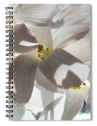 Oxalis Flowers Spiral Notebook