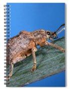 Oxyops Vitiosa Leaf Weevil On Melaleuca Spiral Notebook