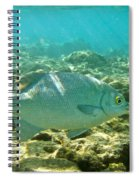 Pacific Chub 1080113.jpg Spiral Notebook