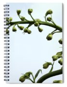 Pacific Giant Astolat Spiral Notebook