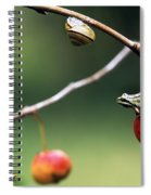 Pacific Tree Frog On A Crab Apple Spiral Notebook