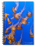 Pack Of Jelly Fish Spiral Notebook