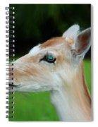 Painted Deer Spiral Notebook