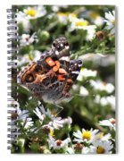 Painted Lady - Surrounded In White Spiral Notebook