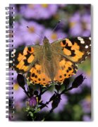 Painted Lady Among The Asters Spiral Notebook