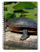 Painted Turtle On Log Spiral Notebook