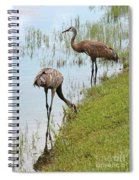 Pair Of Sandhills At The Marsh Spiral Notebook