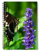 Palamedes Swallowtail Butterfly Spiral Notebook
