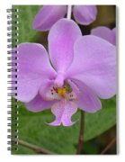 Pale Pink Orchid Spiral Notebook