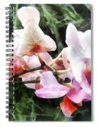 Pale Pink Phalaenopsis Orchids Spiral Notebook