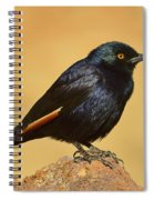 Pale-winged Starling Spiral Notebook