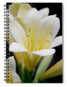 Pale Yellow Clivia Miniata Flowers Spiral Notebook