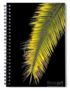 Palm Frond Against Black Spiral Notebook
