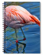 Palm Springs Flamingo Spiral Notebook