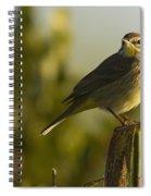 Palm Warbler, Everglades National Park Spiral Notebook