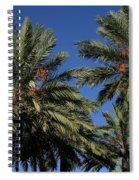 Palms 9838b Spiral Notebook