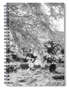 Palo Verde Blossoms Spiral Notebook