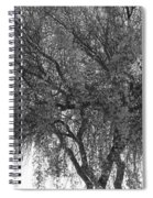 Palo Verde Tree 2 Spiral Notebook