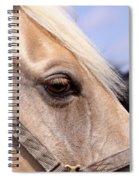 Palomino At Benson Spiral Notebook