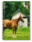 Palomino In Pasture Spiral Notebook