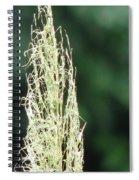 Pampas Grass 02 Spiral Notebook