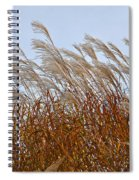 Pampas Grass In The Wind 1 Spiral Notebook