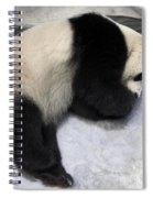 Panda Paws Spiral Notebook