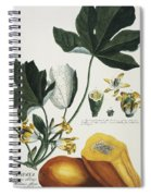 Papaya Spiral Notebook