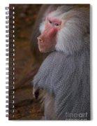 Papio Hamadryas Baboon Spiral Notebook