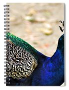 Parading Peacock Spiral Notebook