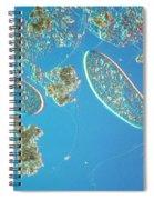 Paramecium Spiral Notebook