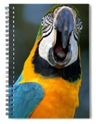Parrot Squawking Spiral Notebook