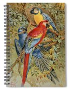 Parrots: Macaws, 19th Cent Spiral Notebook