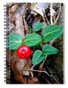 Partridge Berry Berry - Mitchella Repens Spiral Notebook