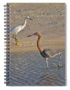 Passing Egrets Spiral Notebook