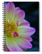 Pastel Dahlia Spiral Notebook