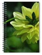 Pastel Lemon Dahlia 2 Spiral Notebook