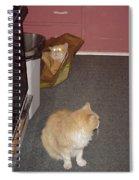 Patty Vs Vengeful Sack God  Spiral Notebook