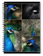 Pavo Cristatus IIi The Heart Of Solitude  - Indian Blue Peacock  Spiral Notebook