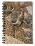 Paws Spiral Notebook