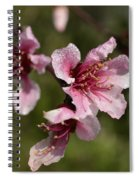Peach Blossom Clusters Spiral Notebook